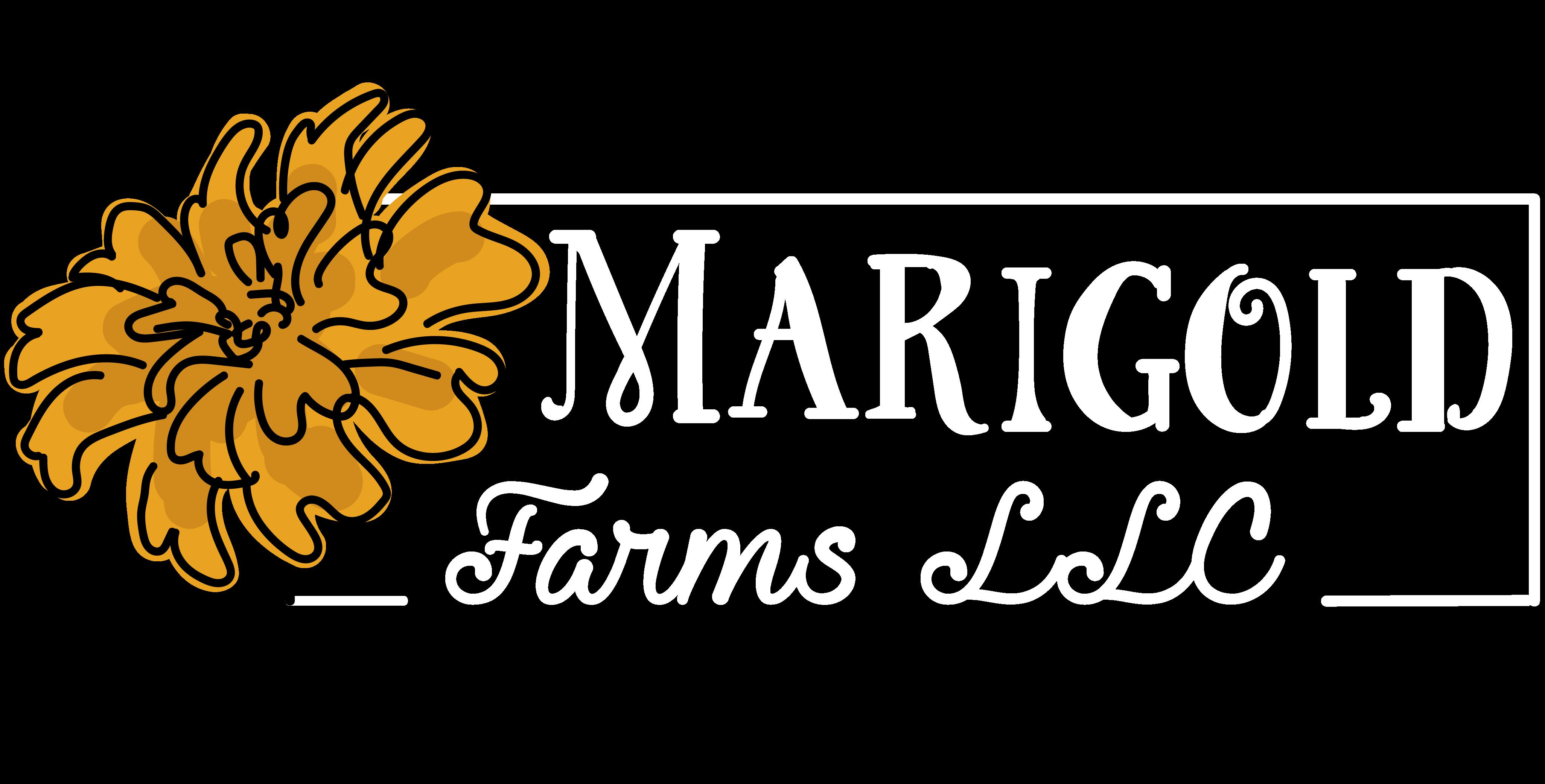 Marigold Sheltiepoos